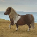 Blink Productions films Three's dancing pony on location on Shetland