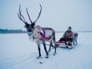Gordon Buchanan on filming in Finnish Lapland for the BBC