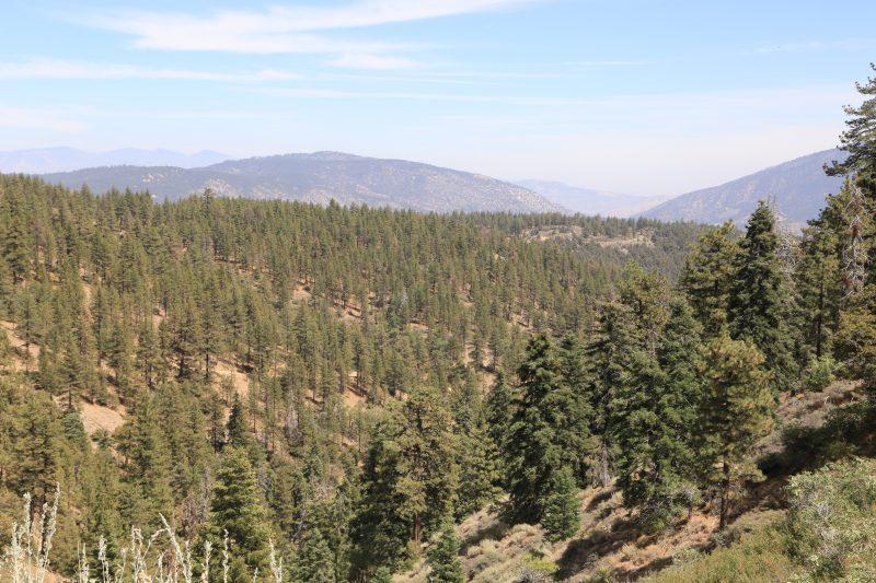 Calamity Jane's Overlook Mt Pins