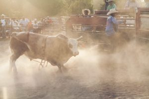 Feature film Bull filmed on location at Houston rodeos