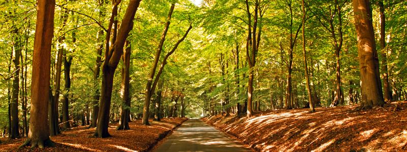 A country lane on the Ashridge Estate in hertfordshire on an autumn day